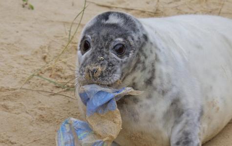 Plastic: Earth's silent virus