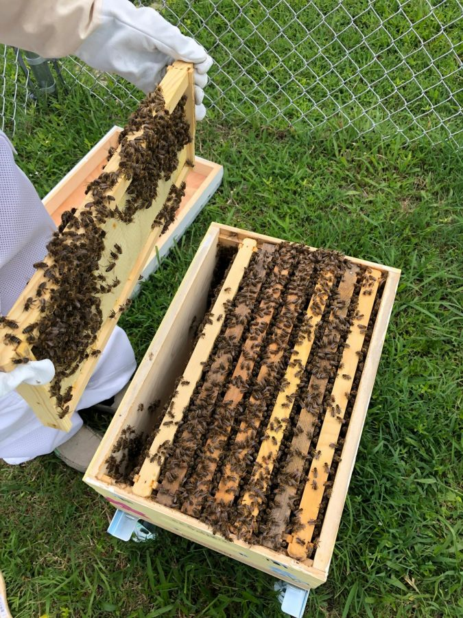 Bee their voice: PA's bee activists work far beyond the hive